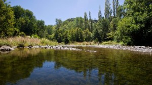 Forestry standards will 'harm region's biodiversity'
