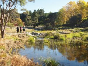 Wetland Reinstated at Groom Creek