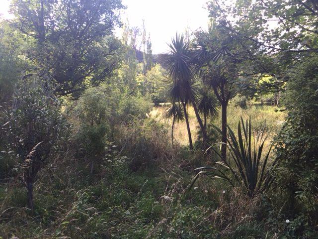 Hanby Park, Planting