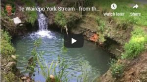 Te Wairepo York Stream Video